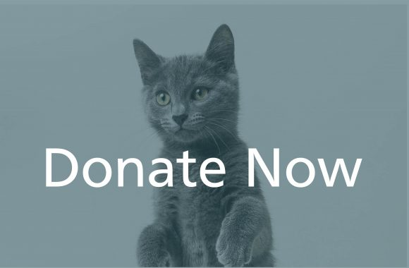 donate now cat begging animal shelter