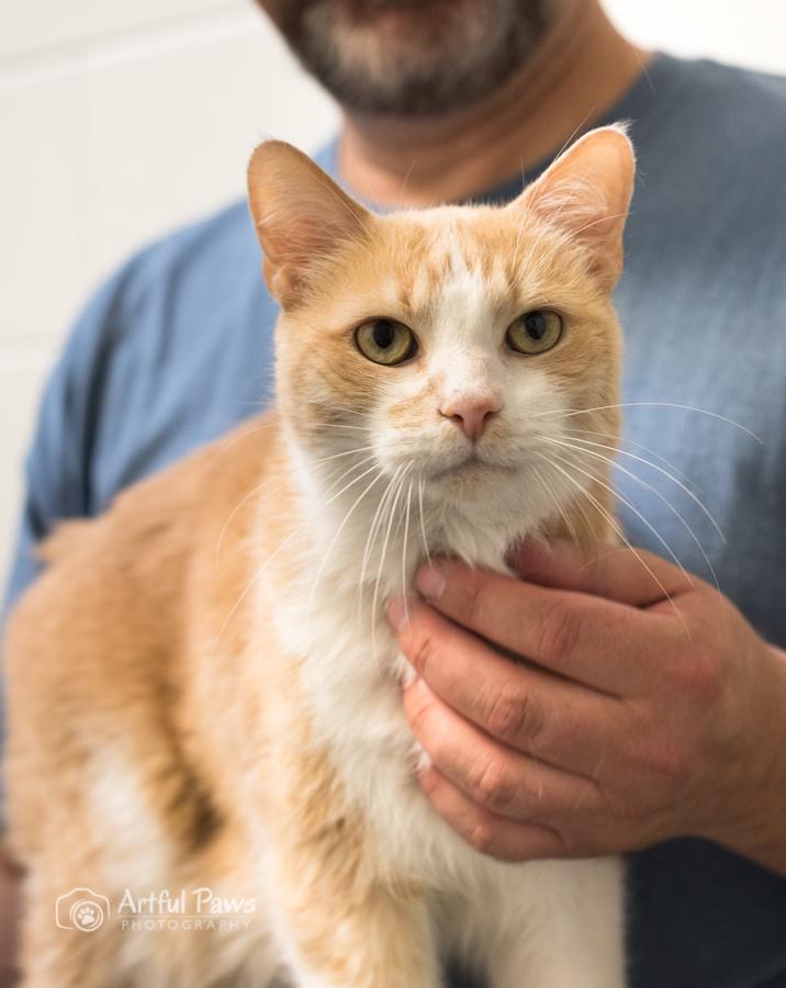 artful paws orange cat shelter