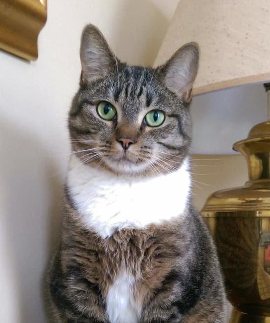 cat green eyes garfield book
