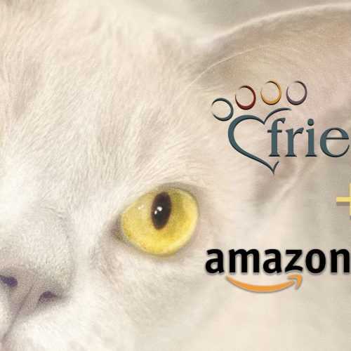 white cat with yellow eyes Amazon Smile and Friends