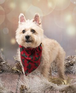 white terrier dog wearing red bandanna