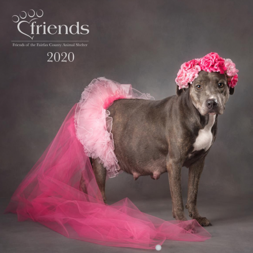 Buy Your 2020 Shelter Pets Calendar Today!