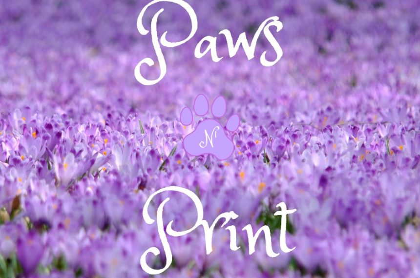 2020 Spring Edition of Paws-n-Print